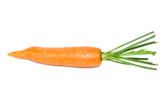 Single carrot. Isolated on the white background Royalty Free Stock Images