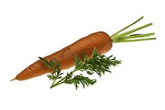 Single Carrot with Leaf Royalty Free Stock Photography