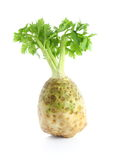 Single celery root with leaf. Isolated on white background Stock Photography