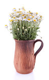 Single ceramic jug with the chamomiles Royalty Free Stock Images