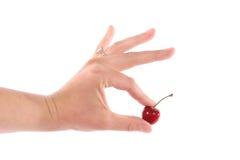 Single Cherry royalty free stock image