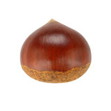 Single chestnut Stock Photo