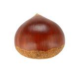 Single chestnut stock photo