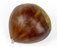 Single chestnut Royalty Free Stock Photos