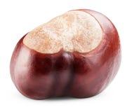 Single chestnut Stock Image