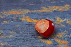 Single chestnut on slate Stock Photography