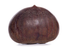 Single chestnut Royalty Free Stock Images