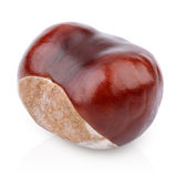 Single chestnut on white Royalty Free Stock Image