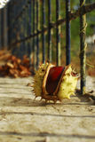 Single chestnuts Royalty Free Stock Images