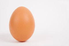 Single chicken egg Royalty Free Stock Photo