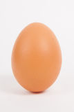Single chicken egg Royalty Free Stock Image