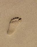 Footprint. A single child's footprint in the sand Stock Photography