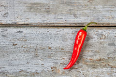 Single chili pepper on wood. Royalty Free Stock Photography