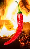Single chili peppers and fire. Single red chili peppers on background with fire Stock Photos
