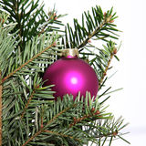Single Christmas bauble in a tree Stock Photography