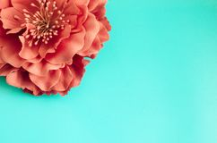 Single chrysanthemum flower on green blue background. Spring gretting card copy space Royalty Free Stock Images