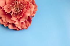 Single chrysanthemum flower on green blue background. Spring gretting card copy space Stock Photo
