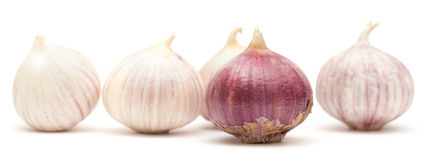 Single clove garlic Stock Photos