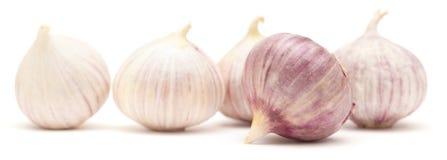 Single clove garlic Stock Photo