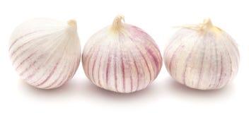 Single clove garlic Stock Photography