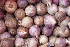 Single clove garlic closeup Stock Photos