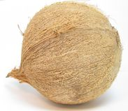 Single coconut Stock Photography