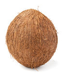 Single coconut stock image