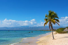 Single coconut palm tree on the beach with sun Stock Photography