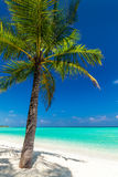 Single coconut palm tree on a tropical beach Royalty Free Stock Photography