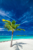 Single coconut palm tree on a tropical beach casting shadow Stock Photos