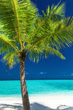Single coconut palm tree on a white tropical beach Royalty Free Stock Image