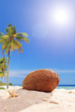 Single coconut in the sand on a tropical beach Royalty Free Stock Images