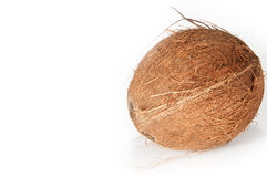 Single coconut on a white background. A single coconut right adjusted in the picture isolated on white background royalty free stock photo