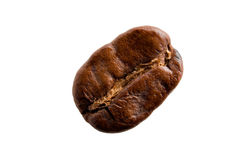 Single coffee bean Stock Images