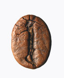 Single coffee bean Royalty Free Stock Image