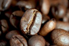 Single coffee bean. With blured background, extreme close up royalty free stock image