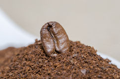 Single coffee bean on ground Stock Image