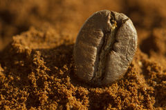 Single coffee bean on ground coffee with blurred background. Extreme close up, macro stock photo