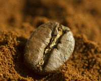 Single coffee bean on ground coffee with blurred background. Extreme close up, macro stock image