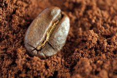 Single coffee bean. On ground coffee, extreme close up royalty free stock images