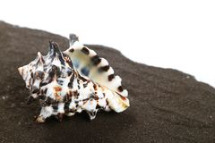 Sea shell Royalty Free Stock Photo
