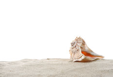 Single Conch sea shell on sand Stock Photography