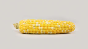 Single Corn Stock Photography