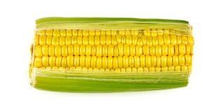 Single corn cob isolated on white background Royalty Free Stock Photos