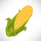 Single corncob in leaves Stock Photo
