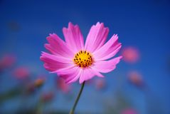 Single Cosmos Royalty Free Stock Images