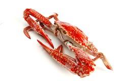 Single crab Royalty Free Stock Photos