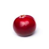 Single cranberry Stock Image