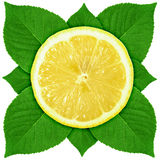 Single cross section of lemon with green leaf Royalty Free Stock Image
