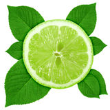Single cross section of lime with green leaf Royalty Free Stock Image